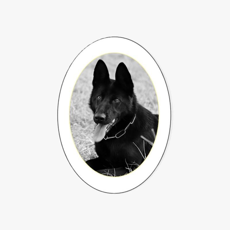 MÉDAILLON PHOTO PORCELAINE OVALE NOIR ET BLANC FILET OR POUR ANIMAUX CHIEN CHAT