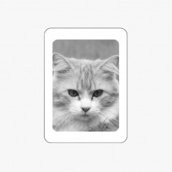 MÉDAILLON PHOTO PORCELAINE RECTANGLE NOIR ET BLANC BORDURE BLANCHE ANIMAUX