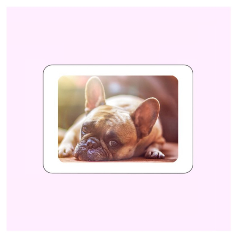 MÉDAILLON PHOTO PORCELAINE RECTANGLE HORIZONTAL COULEUR BORDURE BLANCHE ANIMAUX