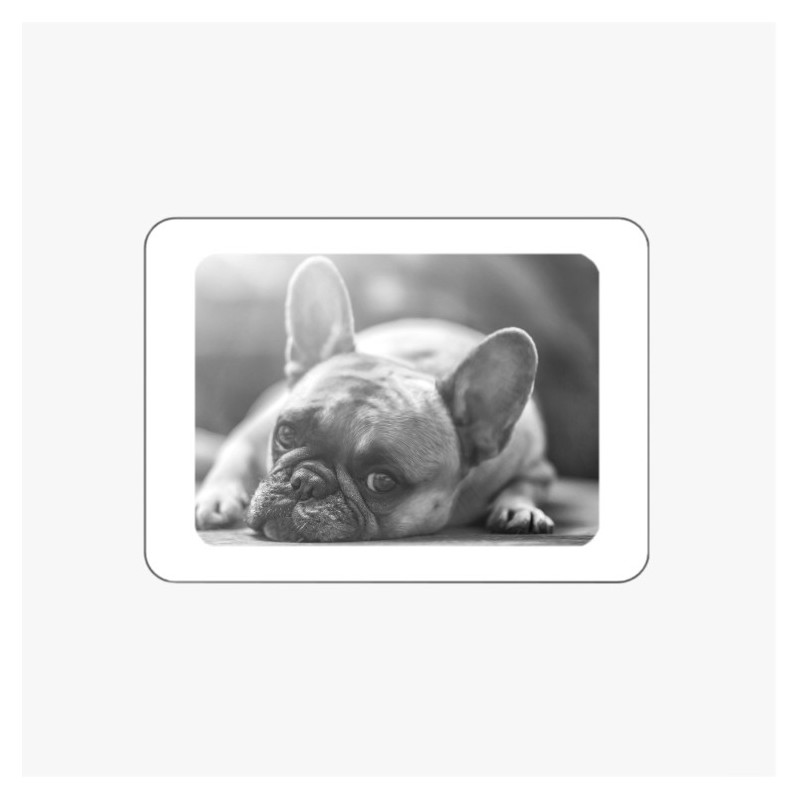 MÉDAILLON PHOTO PORCELAINE RECTANGLE HORIZONTAL BORDURE BLANCHE NOIR ET BLANC ANIMAUX