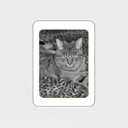 MÉDAILLON PHOTO PORCELAINE RECTANGLE FILET OR NOIR ET BLANC ANIMAUX