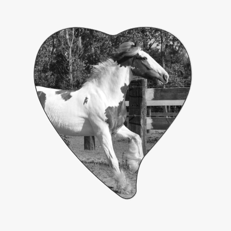 MÉDAILLON PHOTO PORCELAINE GRAND COEUR NOIR ET BLANC PLEINE FACE ANIMAUX