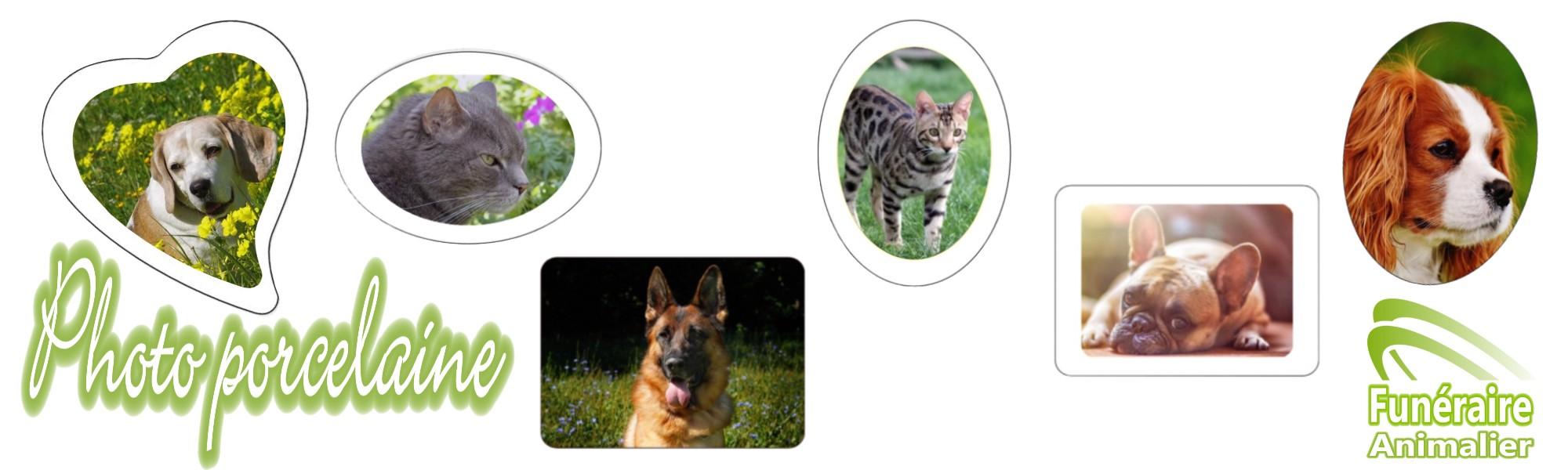 photo porcelaine médaillon pour animaux chiens chats