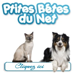 Les p'tites bêtes du net forum animaux