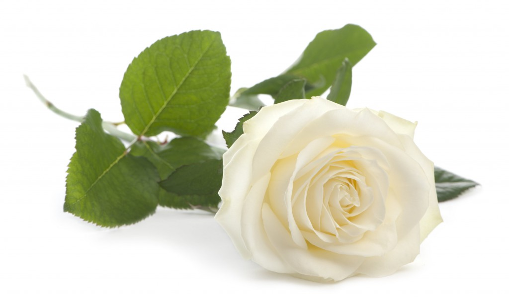 funéraire animalier. articles funeraires pour animaux
